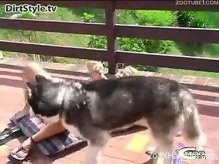 Beauty sucks big erect penis of playful husky