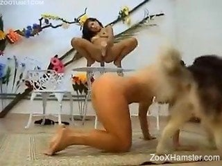 Hot zoophile babes use dogs for own sexual satisfaction