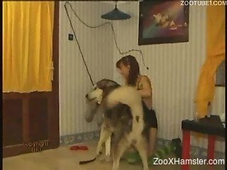 Mad bitch in green stockings sucks dog's cock and pokes pussy