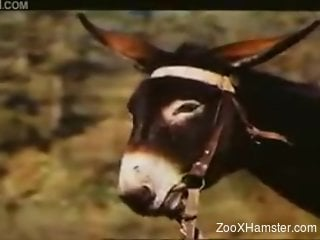 Zoophile clip of wild stallion harassing and fucking donkey