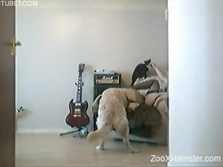 Masked girl directs playful Labrador on licking her snatch