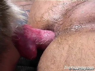 Dirty Latina twink has nice sex with his Husky by poolside