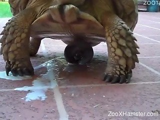 Buddy films his aroused big turtle who ejaculates outdoors