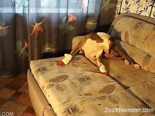 Playful girl and her bulldog embark sensual anal sex on couch