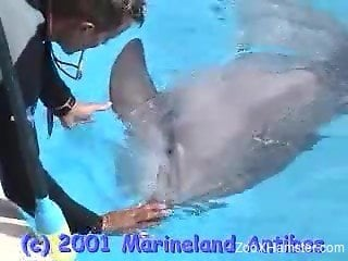 Dolphin trainer on daily training watches mammal's penis