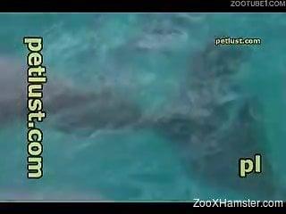 Dirty pervert masturbates dolphin's erected penis with ...