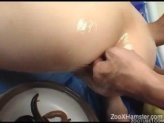 Japanese sluts filmed in raw scenes of zoophilia porn