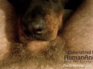 Dog deepthroating a really hairy cock on camera