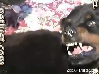 Black dog cannot stop fucking a chubby dude's asshole
