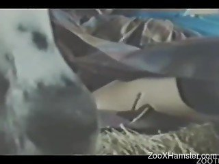 Masked farm zoophile sucks her animal and gets fucked
