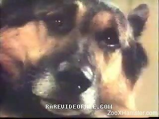 Retro video of horny ladies in threesome with dog