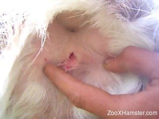Man sticks his hard fingers in a tight anal hole of a doggy