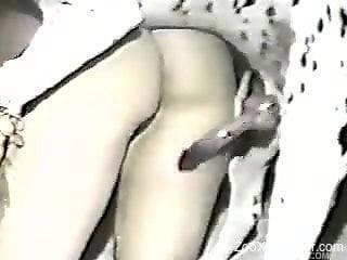Gorgeous hottie is sucking a juicy wiener of a sexy black animal