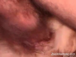 Man with nasty hairy balls is fucking his own doggy with passion