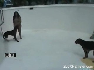 Thick Latina gets swarmed by dogs and fucked hard in an emptie...