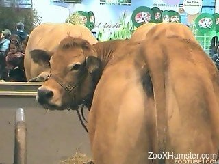 Horny-looking cow showing off its succulent asshole like a slut