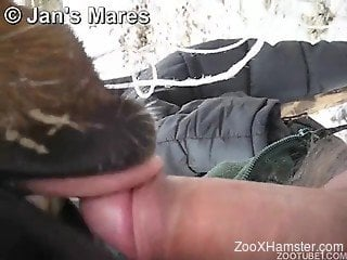Sexy-looking brown animal blows a perverse male zoophile