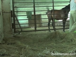 Black stallion gets a great blowjob from an amateur