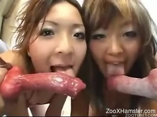 JAV pornography featuring horny schoolgirls and hung dogs