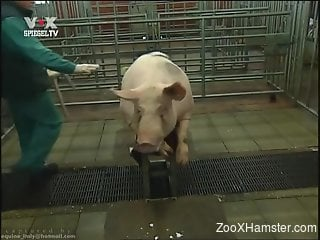 Man craves for sex with these two pigs