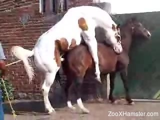 White stallion fucks a horny horse