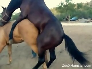 Brown horse dominating a tight pussy from behind