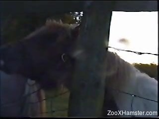 Farm animal licking ass and filmed by someone