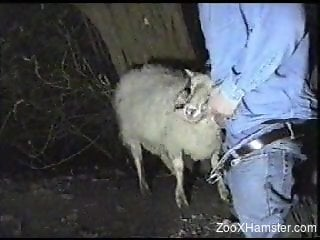 Denim-clad zoophile fucking a sheep's sexy throat