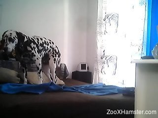 Horny guy is set to deep fuck his dog in the ass