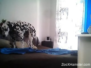 Horny man walks into the room to hard fuck his dog on cam