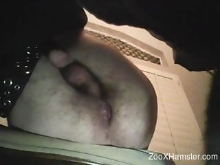 Hairy asshole dude gets a nice rimjob from a dog