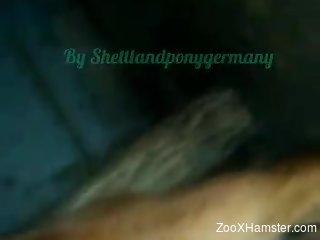 Dog licks man's big penis while the guy films himself