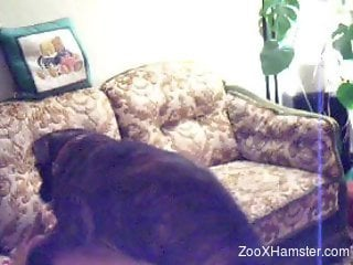 Amateur babe gets her pussy fucked from behind by a dog
