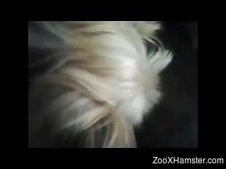 Dude lets a dog lick his meaty cock in a POV scene