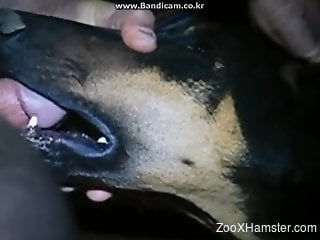 Sexy dog getting throated by a really kinky dude