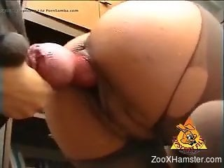 Redheaded zoophile chick getting pounded by a dog