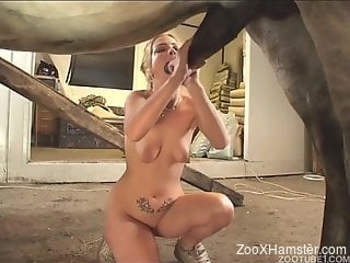Busty cocksucker blonde is in love with horse cocks