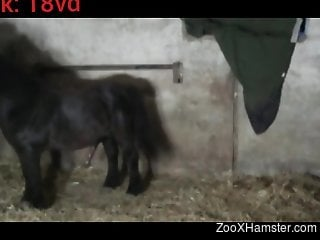 Assless chaps zoophile gets fucked by a horny pony