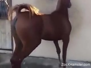 Sexy mare flaunting its pussy in a fun solo video