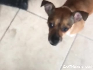 Dude gets a nice blowjob from his sexy-looking dog