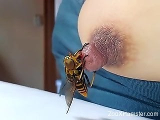 Bee stings that gorgeous nipple and it's very sexy