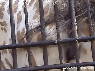 Pretty pussy animal rubs its hole against the bars