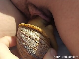 Sexy snail pleasuring a juicy pussy right here